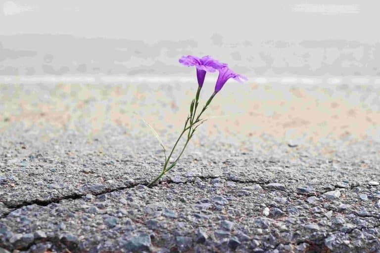 Es braucht Vertrauen und Mut um Widerstände zu durchbrechen. Durch gute Ressourcen entwickeln wir Resilienz, wie eine Blume, die alle Widerstände durchbrechen kann.